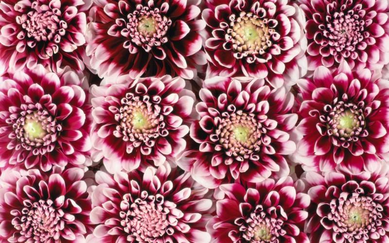 1920花朵背景 3 11壁纸 1920花朵背景壁纸 1920花朵背景图片 1920花朵背景素材 花卉壁纸 花卉图库 花卉图片素材桌面壁纸