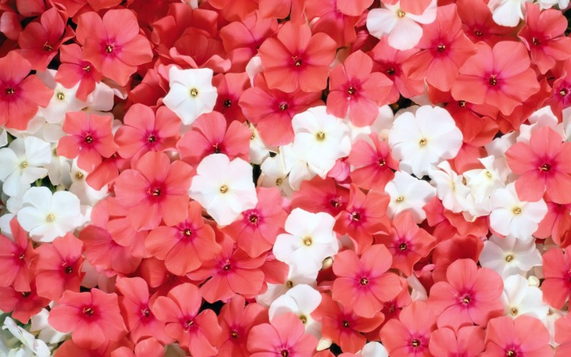 1920花朵背景 3 8壁纸 1920花朵背景壁纸 1920花朵背景图片 1920花朵背景素材 花卉壁纸 花卉图库 花卉图片素材桌面壁纸