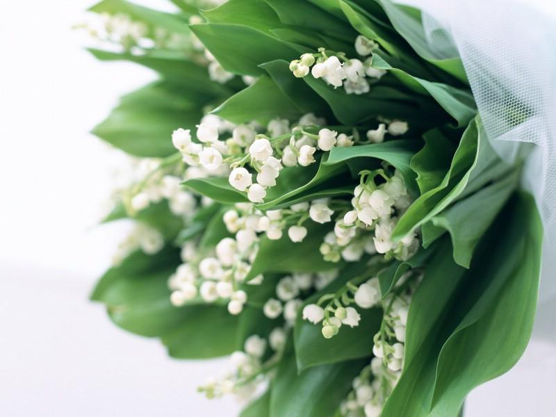 白色花朵 3 1壁纸 白色花朵壁纸 白色花朵图片 白色花朵素材 花卉壁纸 花卉图库 花卉图片素材桌面壁纸