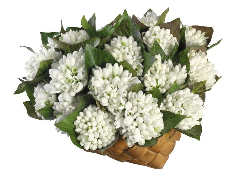 白色花朵 4 18壁纸 白色花朵壁纸 白色花朵图片 白色花朵素材 花卉壁纸 花卉图库 花卉图片素材桌面壁纸