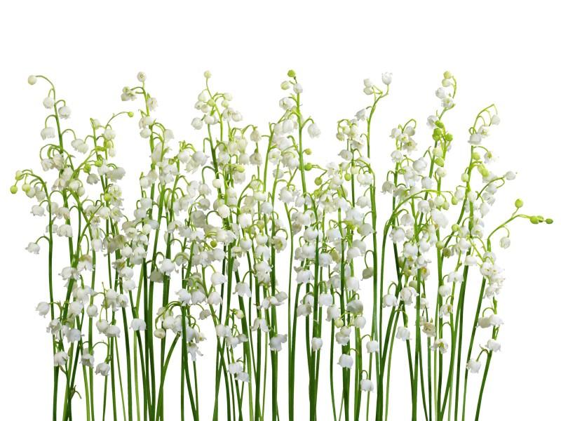 白色花朵 4 13壁纸 白色花朵壁纸 白色花朵图片 白色花朵素材 花卉壁纸 花卉图库 花卉图片素材桌面壁纸