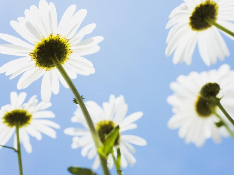 白色花朵 4 10壁纸 白色花朵壁纸 白色花朵图片 白色花朵素材 花卉壁纸 花卉图库 花卉图片素材桌面壁纸