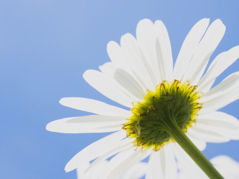 白色花朵 4 9壁纸 白色花朵壁纸 白色花朵图片 白色花朵素材 花卉壁纸 花卉图库 花卉图片素材桌面壁纸