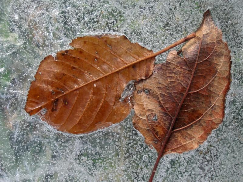 冰雪植物 2 20壁纸 冰雪植物壁纸 冰雪植物图片 冰雪植物素材 花卉壁纸 花卉图库 花卉图片素材桌面壁纸