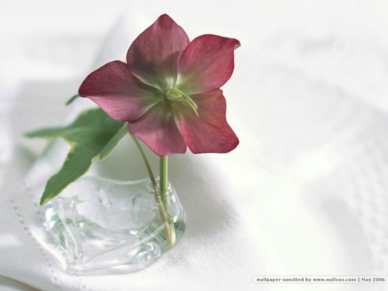 插花艺术 花卉图片 Desktop Wallpaper of Flower Art壁纸 插花艺术祝福的花饰壁纸 插花艺术祝福的花饰图片 插花艺术祝福的花饰素材 花卉壁纸 花卉图库 花卉图片素材桌面壁纸