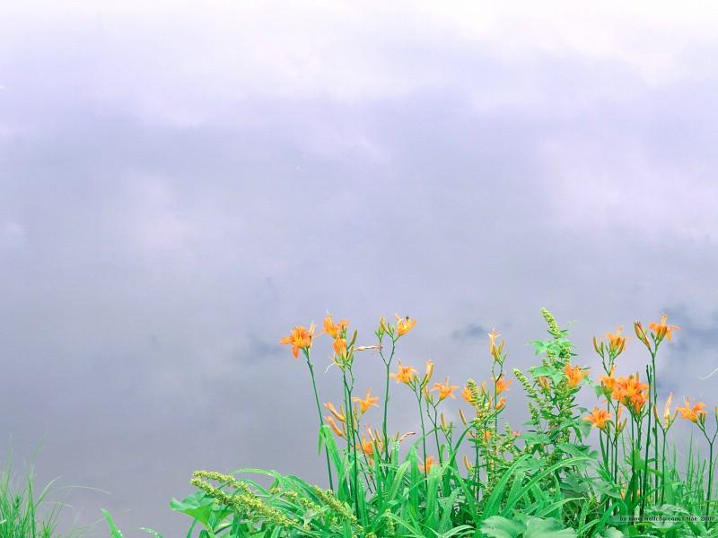 二 春天花卉图片壁纸 Desktop Wallpaper of Spring Flowers壁纸 春暖花开壁纸 春暖花开图片 春暖花开素材 花卉壁纸 花卉图库 花卉图片素材桌面壁纸