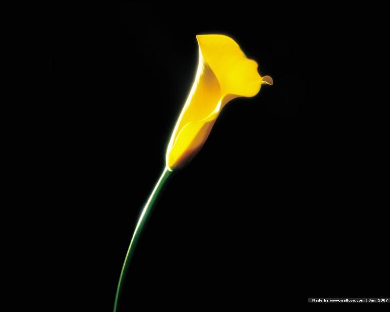 浪漫花卉艺术图片 Desktop Wallpaper of Romantic flowers壁纸 典雅花卉艺术摄影壁纸 典雅花卉艺术摄影图片 典雅花卉艺术摄影素材 花卉壁纸 花卉图库 花卉图片素材桌面壁纸