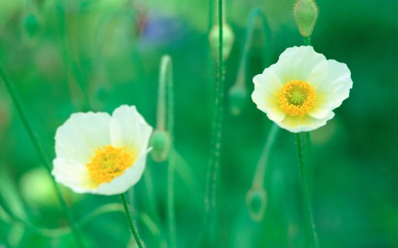 6种尺寸 韩国花卉摄影壁纸 Professional flower photography壁纸 韩国花卉摄影集壁纸 韩国花卉摄影集图片 韩国花卉摄影集素材 花卉壁纸 花卉图库 花卉图片素材桌面壁纸
