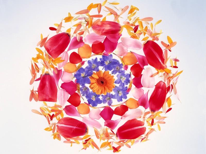 1600花朵背景 1 13壁纸 花朵背景 1600花朵背景 第一辑壁纸 花朵背景 1600花朵背景 第一辑图片 花朵背景 1600花朵背景 第一辑素材 花卉壁纸 花卉图库 花卉图片素材桌面壁纸