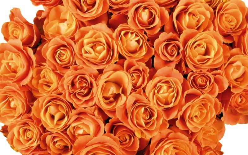 1920花朵背景 1 20壁纸 花朵背景 1920花朵背景 第一辑壁纸 花朵背景 1920花朵背景 第一辑图片 花朵背景 1920花朵背景 第一辑素材 花卉壁纸 花卉图库 花卉图片素材桌面壁纸