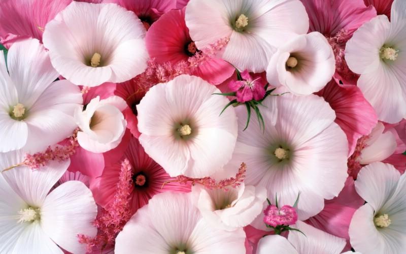 1920花朵背景 1 17壁纸 花朵背景 1920花朵背景 第一辑壁纸 花朵背景 1920花朵背景 第一辑图片 花朵背景 1920花朵背景 第一辑素材 花卉壁纸 花卉图库 花卉图片素材桌面壁纸