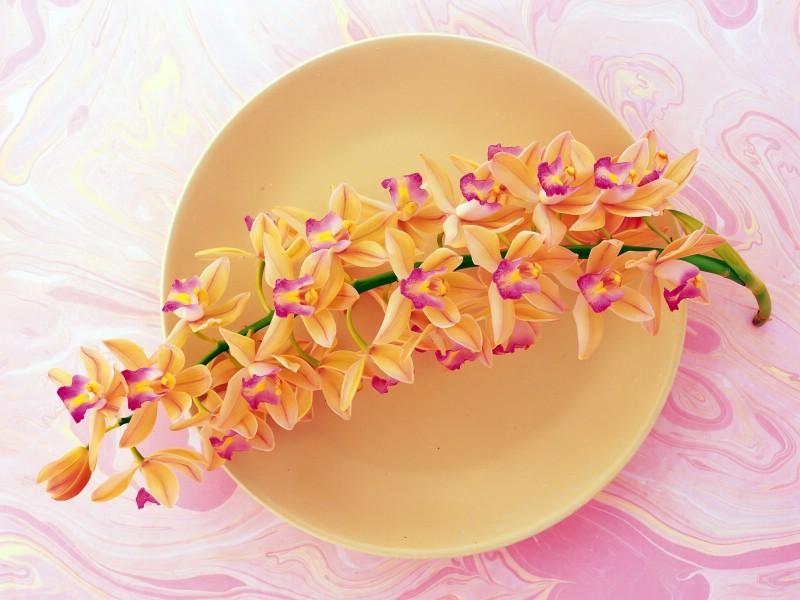 花艺大餐 2 19壁纸 花艺大餐壁纸 花艺大餐图片 花艺大餐素材 花卉壁纸 花卉图库 花卉图片素材桌面壁纸