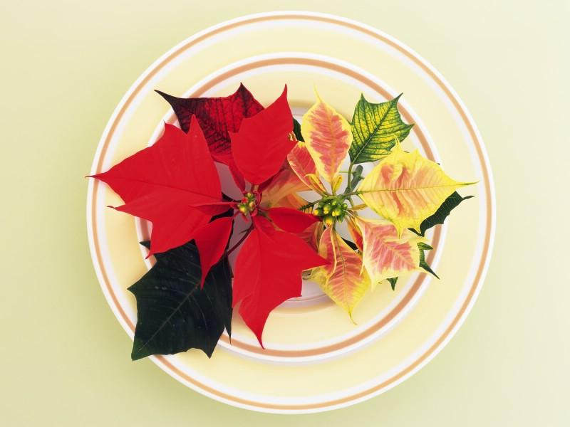 花艺大餐 2 12壁纸 花艺大餐壁纸 花艺大餐图片 花艺大餐素材 花卉壁纸 花卉图库 花卉图片素材桌面壁纸