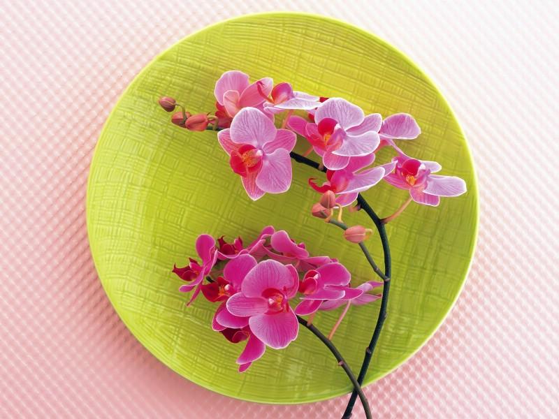 花艺大餐 2 7壁纸 花艺大餐壁纸 花艺大餐图片 花艺大餐素材 花卉壁纸 花卉图库 花卉图片素材桌面壁纸