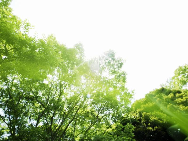 护眼桌面壁纸天空草坪桌面壁纸草坪房子下载草坪