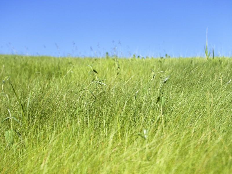 绿色草地 4 20壁纸 绿色草地壁纸 绿色草地图片 绿色草地素材 花卉壁纸 花卉图库 花卉图片素材桌面壁纸