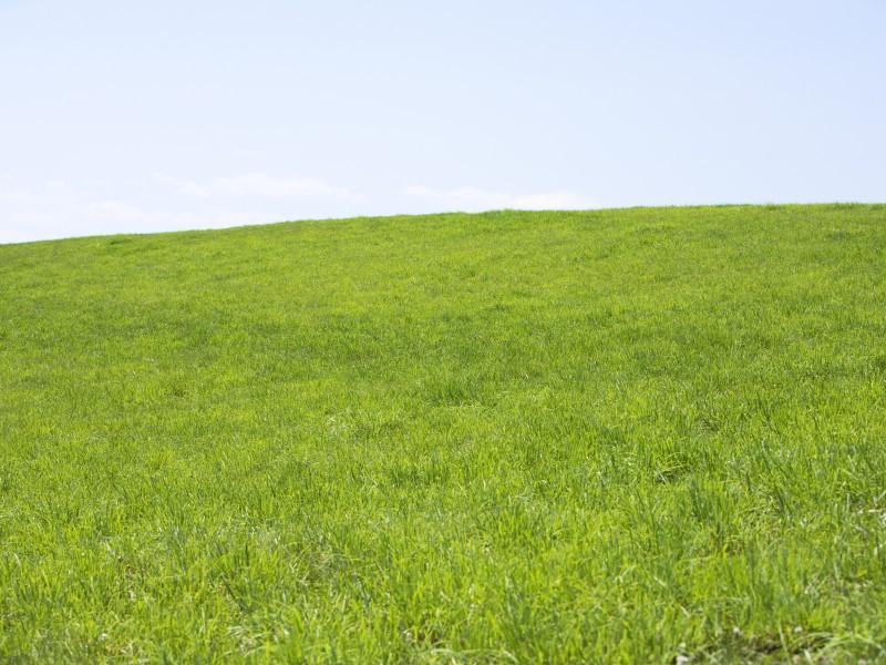 绿色草地 4 19壁纸 绿色草地壁纸 绿色草地图片 绿色草地素材 花卉壁纸 花卉图库 花卉图片素材桌面壁纸
