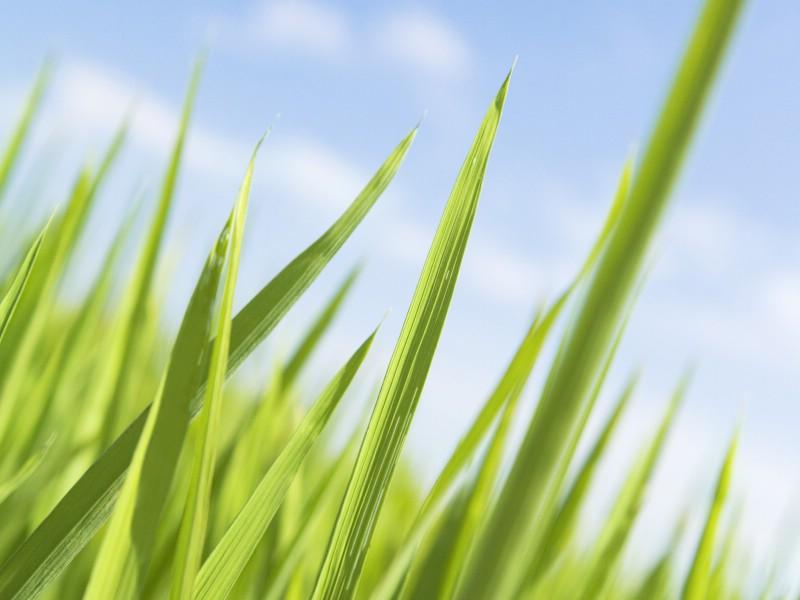 绿色草地 4 11壁纸 绿色草地壁纸 绿色草地图片 绿色草地素材 花卉壁纸 花卉图库 花卉图片素材桌面壁纸