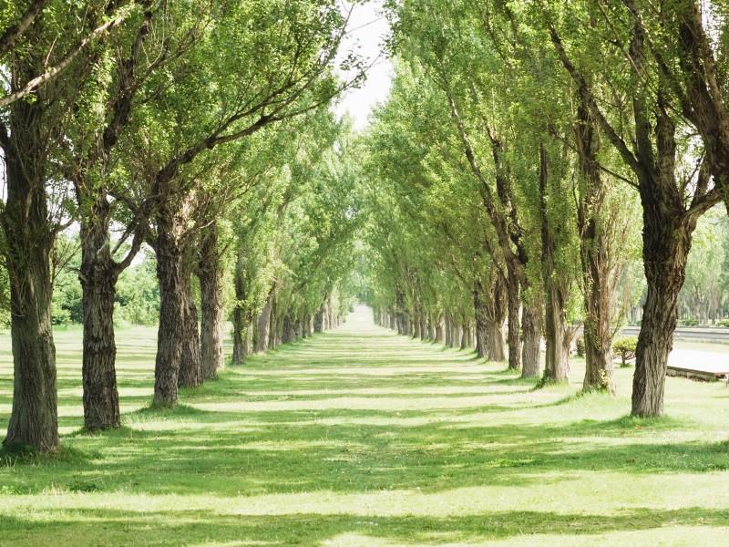 绿色草地 4 10壁纸 绿色草地壁纸 绿色草地图片 绿色草地素材 花卉壁纸 花卉图库 花卉图片素材桌面壁纸