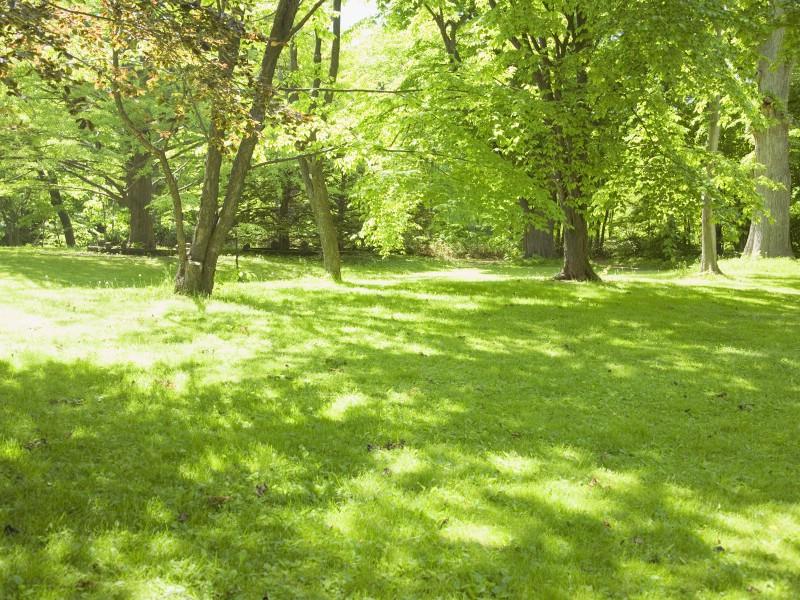 绿色草地 4 9壁纸 绿色草地壁纸 绿色草地图片 绿色草地素材 花卉壁纸 花卉图库 花卉图片素材桌面壁纸