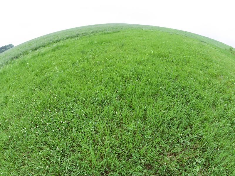 绿色草地 4 6壁纸 绿色草地壁纸 绿色草地图片 绿色草地素材 花卉壁纸 花卉图库 花卉图片素材桌面壁纸