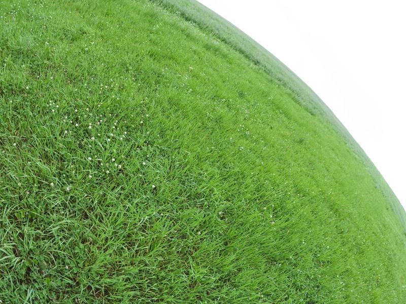 绿色草地 4 5壁纸 绿色草地壁纸 绿色草地图片 绿色草地素材 花卉壁纸 花卉图库 花卉图片素材桌面壁纸