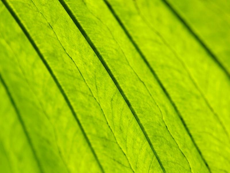 绿叶写真 9 1壁纸 绿叶写真壁纸 绿叶写真图片 绿叶写真素材 花卉壁纸 花卉图库 花卉图片素材桌面壁纸