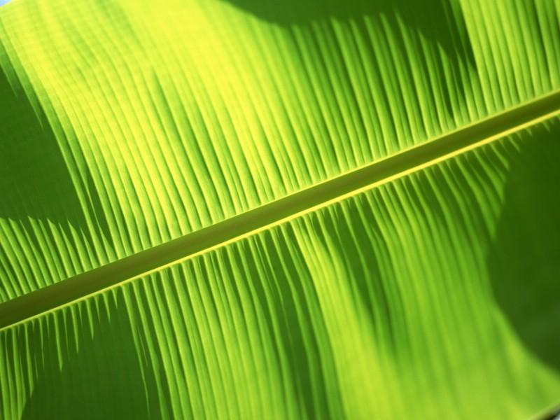 绿叶写真 8 8壁纸 绿叶写真壁纸 绿叶写真图片 绿叶写真素材 花卉壁纸 花卉图库 花卉图片素材桌面壁纸
