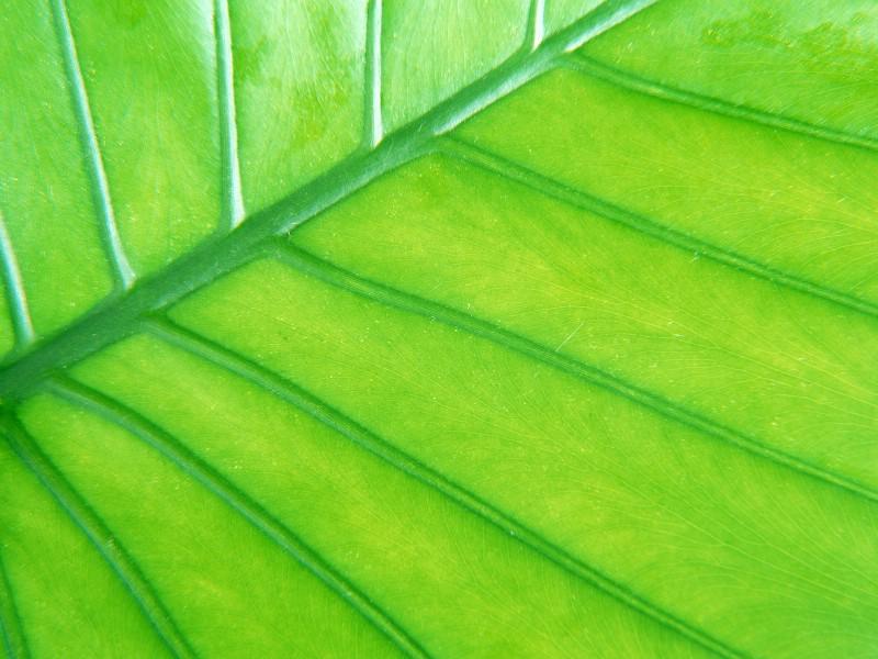 绿叶写真 8 7壁纸 绿叶写真壁纸 绿叶写真图片 绿叶写真素材 花卉壁纸 花卉图库 花卉图片素材桌面壁纸