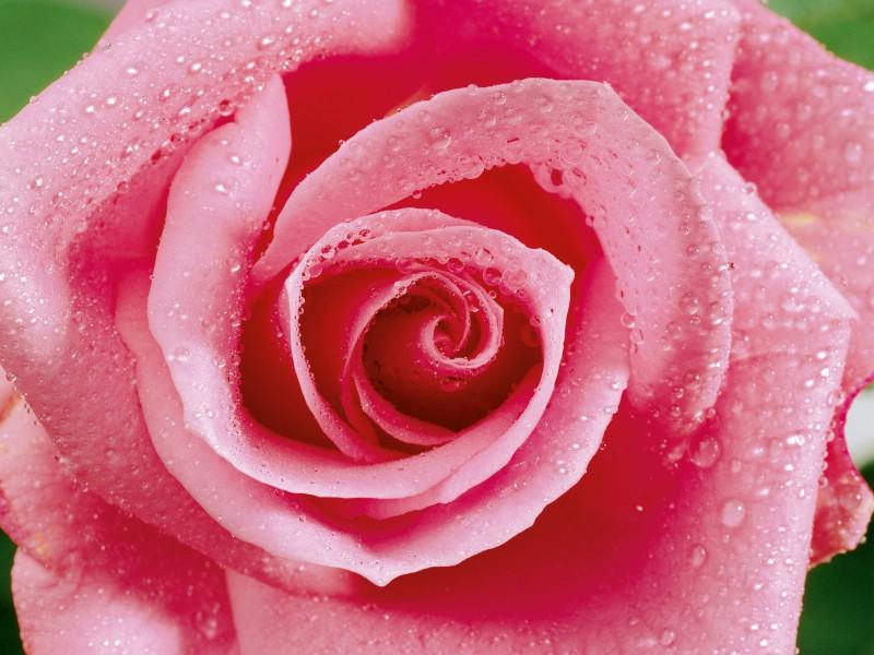 玫瑰写真 5 20壁纸 玫瑰写真壁纸 玫瑰写真图片 玫瑰写真素材 花卉壁纸 花卉图库 花卉图片素材桌面壁纸