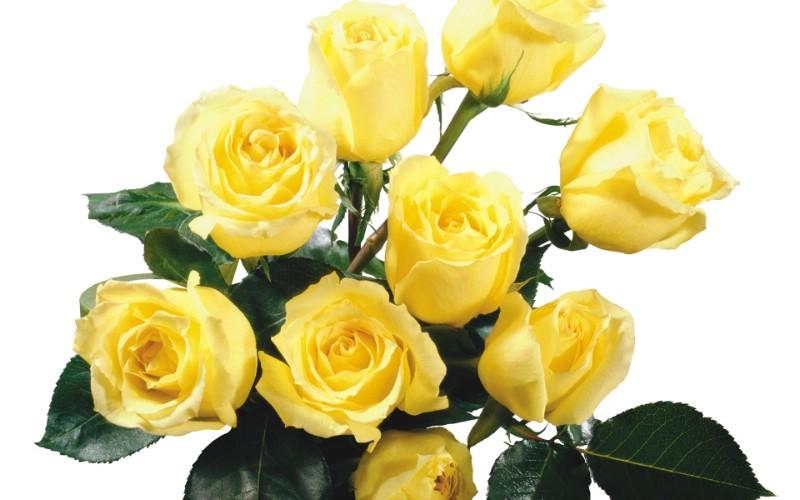 玫瑰写真 4 20壁纸 玫瑰写真壁纸 玫瑰写真图片 玫瑰写真素材 花卉壁纸 花卉图库 花卉图片素材桌面壁纸
