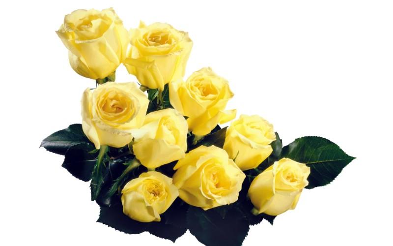 玫瑰写真 4 19壁纸 玫瑰写真壁纸 玫瑰写真图片 玫瑰写真素材 花卉壁纸 花卉图库 花卉图片素材桌面壁纸