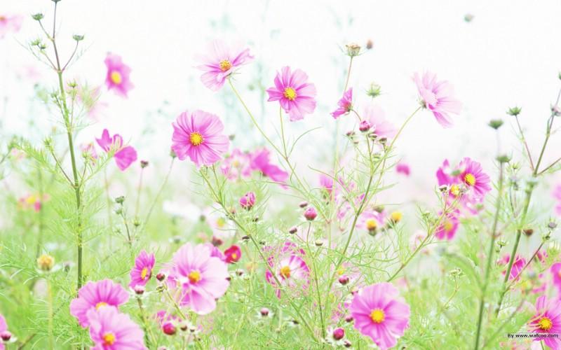 清新风格花卉摄影壁纸