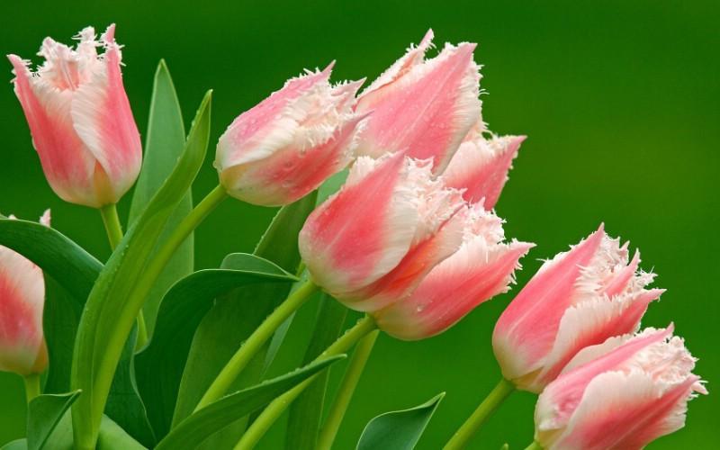 静物摄影花卉拍摄的十大实用技巧