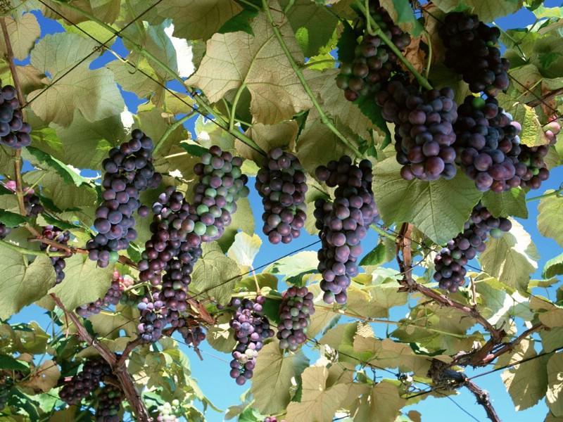 丰收的果实 郊区的秋天