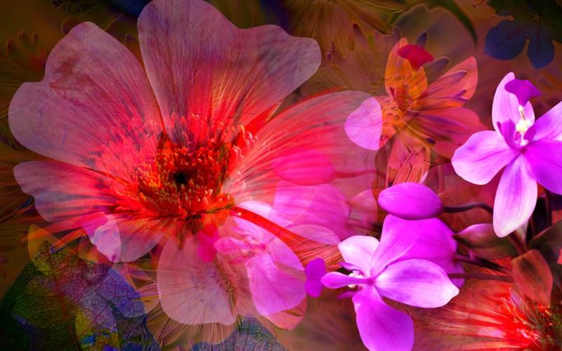 艳丽花卉合成壁纸壁纸 数码合成花卉插画壁纸 数码合成花卉插画图片 数码合成花卉插画素材 花卉壁纸 花卉图库 花卉图片素材桌面壁纸