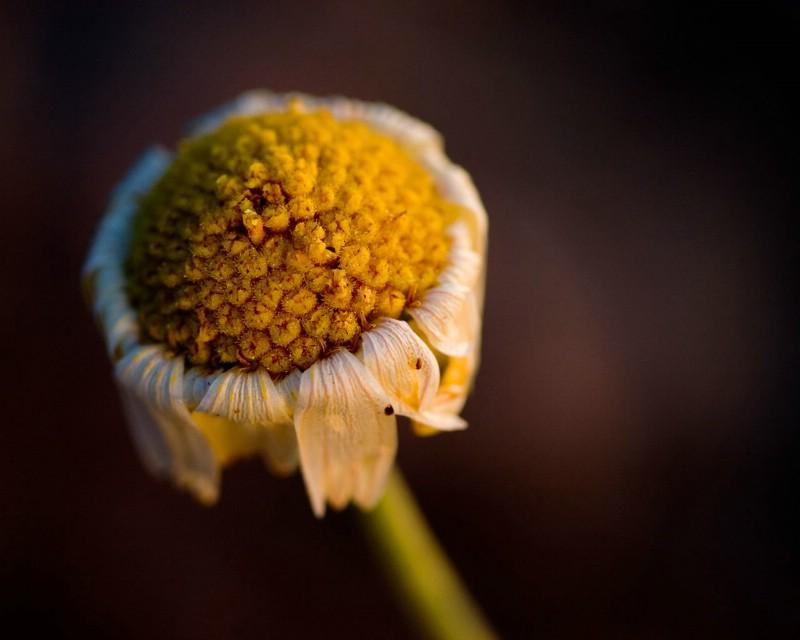 微距下的植物花卉摄影图片 微距下的植物花卉摄影素材 花卉壁纸 花卉