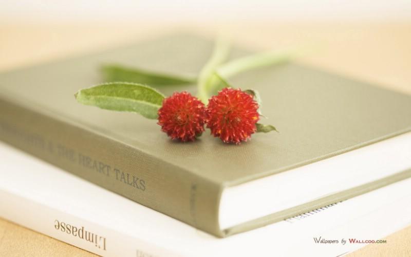 (原创) 我确定----读博友没由老师 诗文《我走进你的诗中了》有感 - 山百合 - 山 百 合