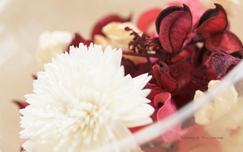 摄影 浪漫室内花卉摄影壁纸 温馨家居插花艺术壁纸 温馨家居插花艺术图片 温馨家居插花艺术素材 花卉壁纸 花卉图库 花卉图片素材桌面壁纸