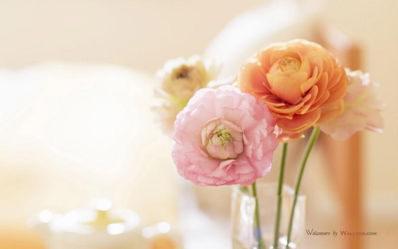 甜蜜家居花卉图片壁纸
