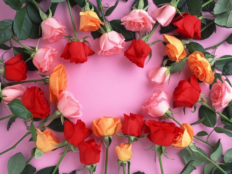 鲜花特写 12 19壁纸 鲜花特写壁纸 鲜花特写图片 鲜花特写素材 花卉壁纸 花卉图库 花卉图片素材桌面壁纸