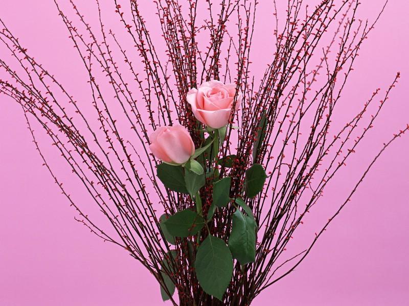 鲜花特写 12 18壁纸 鲜花特写壁纸 鲜花特写图片 鲜花特写素材 花卉壁纸 花卉图库 花卉图片素材桌面壁纸