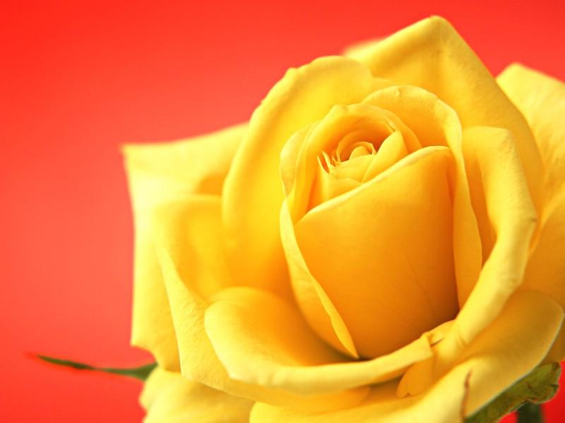 鲜花特写 12 14壁纸 鲜花特写壁纸 鲜花特写图片 鲜花特写素材 花卉壁纸 花卉图库 花卉图片素材桌面壁纸