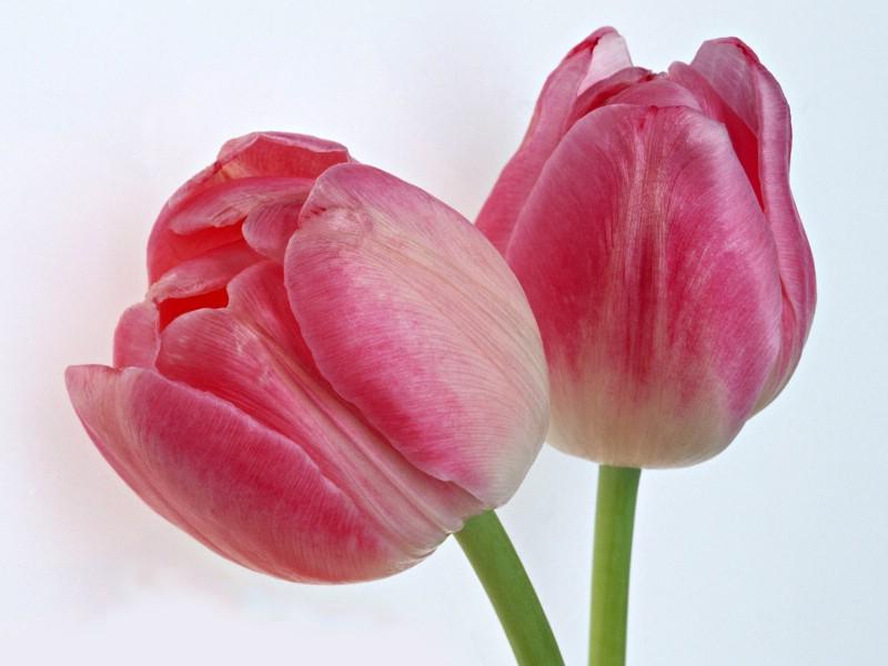 鲜花特写 12 10壁纸 鲜花特写壁纸 鲜花特写图片 鲜花特写素材 花卉壁纸 花卉图库 花卉图片素材桌面壁纸