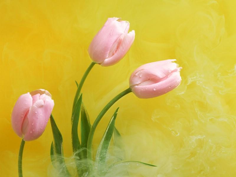 鲜花特写 12 2壁纸 鲜花特写壁纸 鲜花特写图片 鲜花特写素材 花卉壁纸 花卉图库 花卉图片素材桌面壁纸