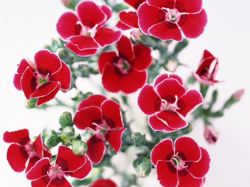 鲜花特写 20 18壁纸 鲜花特写壁纸 鲜花特写图片 鲜花特写素材 花卉壁纸 花卉图库 花卉图片素材桌面壁纸
