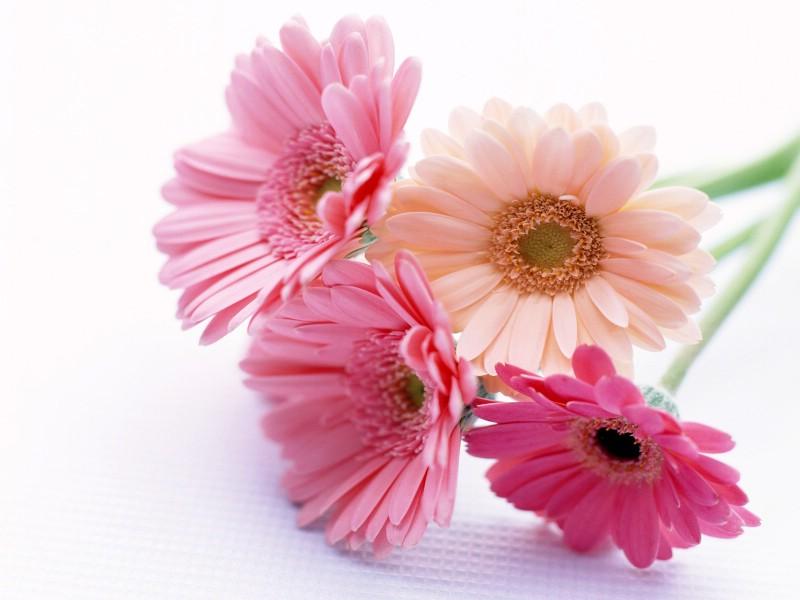 鲜花特写 20 9壁纸 鲜花特写壁纸 鲜花特写图片 鲜花特写素材 花卉壁纸 花卉图库 花卉图片素材桌面壁纸
