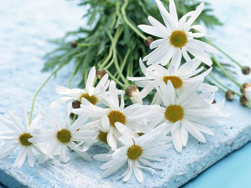 白色花朵 1 20壁纸 鲜花特写 白色花朵 第一辑壁纸 鲜花特写 白色花朵 第一辑图片 鲜花特写 白色花朵 第一辑素材 花卉壁纸 花卉图库 花卉图片素材桌面壁纸