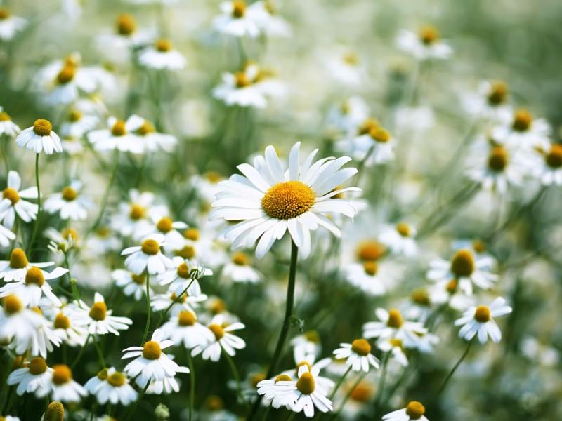 白色花朵 1 19壁纸 鲜花特写 白色花朵 第一辑壁纸 鲜花特写 白色花朵 第一辑图片 鲜花特写 白色花朵 第一辑素材 花卉壁纸 花卉图库 花卉图片素材桌面壁纸