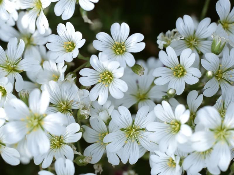 白色花朵 1 18壁纸 鲜花特写 白色花朵 第一辑壁纸 鲜花特写 白色花朵 第一辑图片 鲜花特写 白色花朵 第一辑素材 花卉壁纸 花卉图库 花卉图片素材桌面壁纸